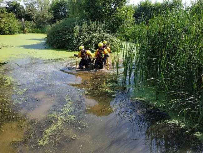 Fire crews carry the lamb to safety. Photo: Bromyard Fire Station.