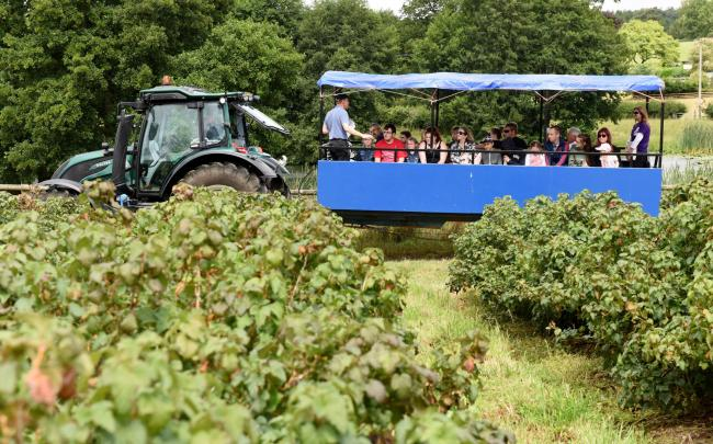 One of the farm tours at the Ribena Big Berry Bash. Photo: Solent News & Photo Agency