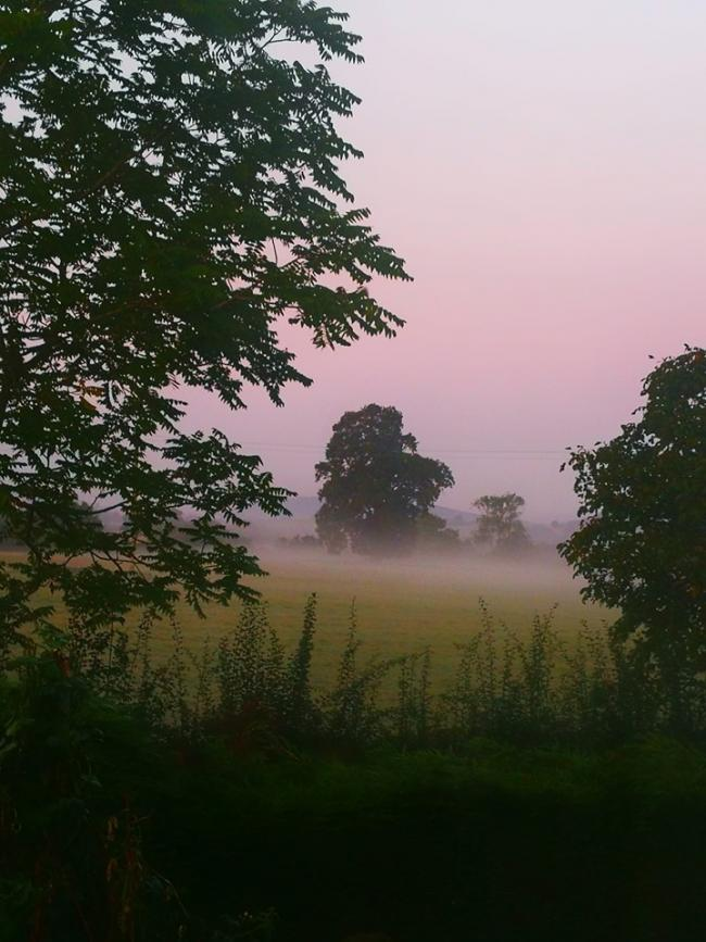 Misty morning in Marden by Andrea Hollis