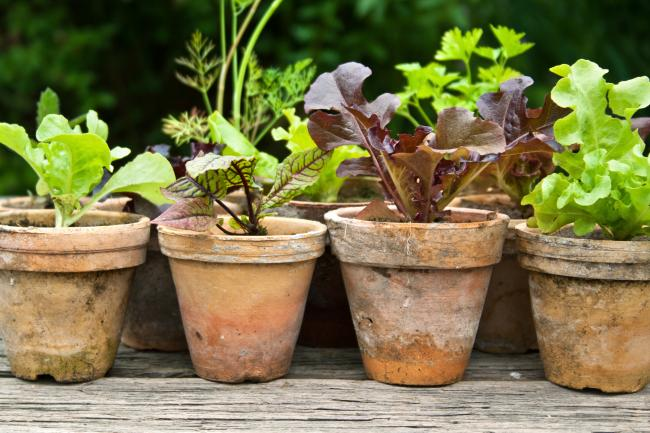 Honesty rule forces resignation over plant pots