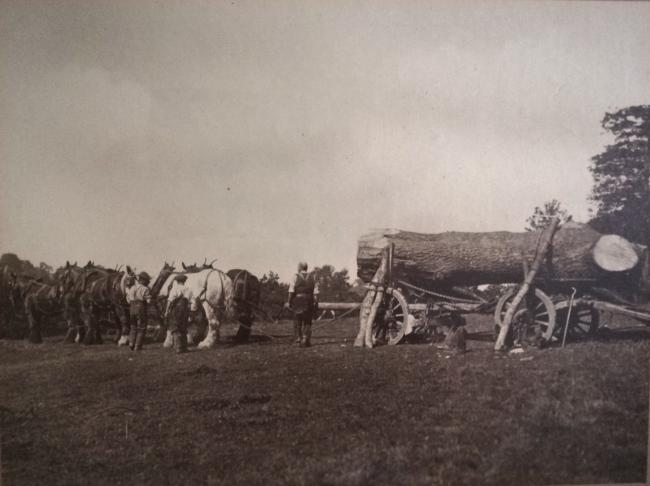 Photo: Courtesy of Stuart Cooper. Timber hauling in 1912