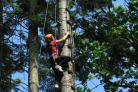 Explore the treetops at Oaker Wood