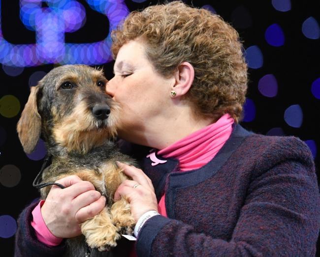 Crufts 2020 Full Results Including Best In Show Hereford Times