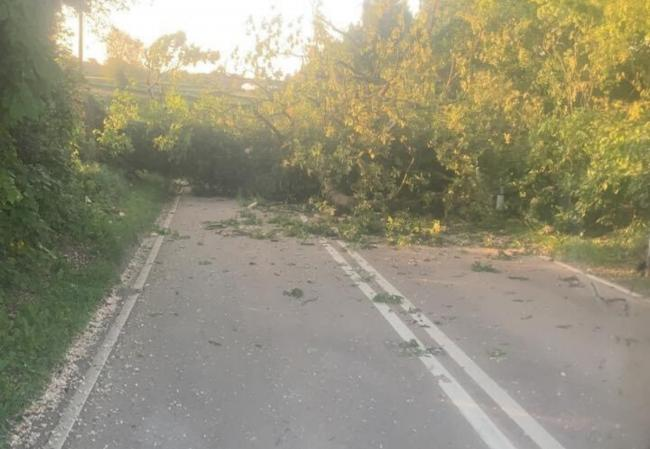 The A44 is closed between Bromyard and Leominster due to a fallen tree. Picture: Phil Brooke