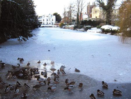 Vicki Stanford sent us this photo of the Castle Pool frozen over with ducks on.
