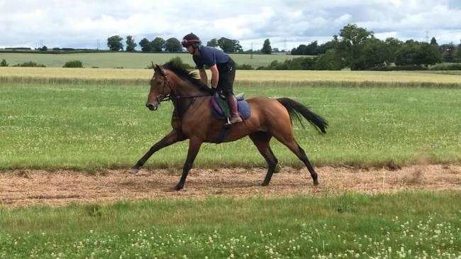 David Dennis on the gallop at Dason Court on gelding Schnabel