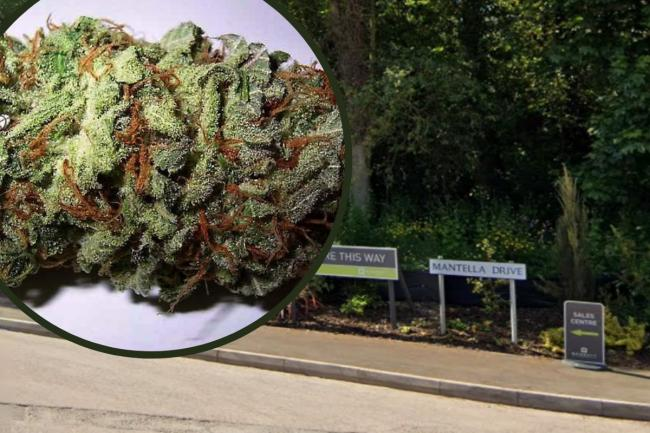 He was stopped on Mantella Drive. Photo: Google Maps/stock cannabis bud image