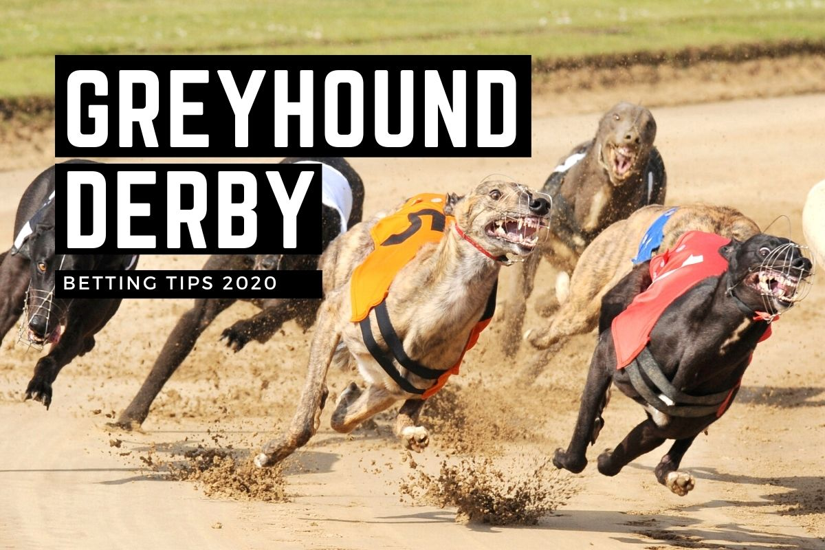 East anglian greyhound derby betting online horse betting dictionary