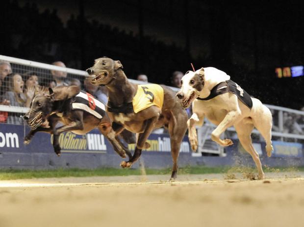 East anglian greyhound derby 2021 betting calculator cshub csgo betting