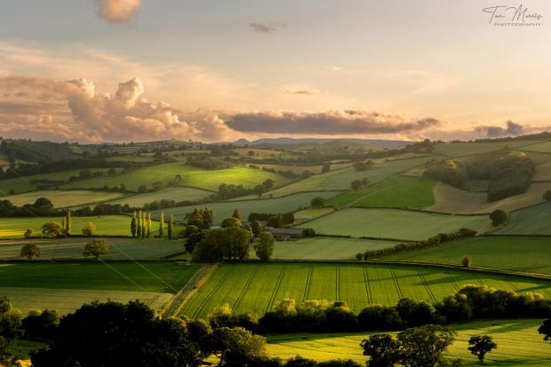 Hereford Times: Golden hour over Wigmore Rolls, Herefordshire, looking towards Leominster. Picture: Tom Morris