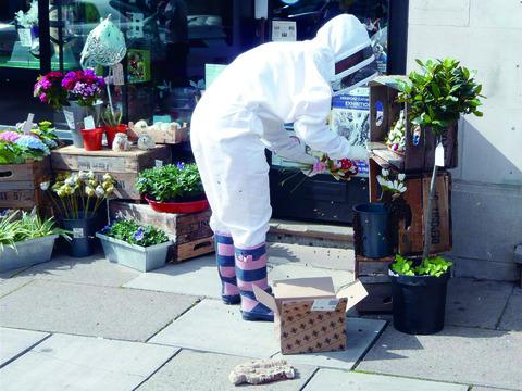 Would you bee-lieve it - bees swarm in Hereford