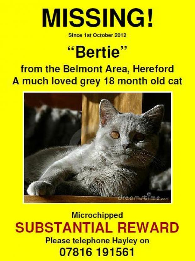 Help find missing cat
