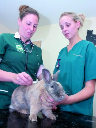 Charlotte Mussell and Natalie Gunner of Brookfield Veterinary Practice give dwarf lop rabbit Albert his vaccination.
