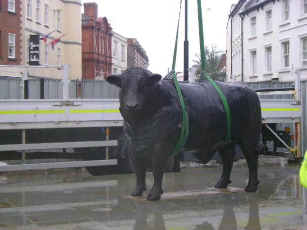 The Hereford bull during its installment in High Town.