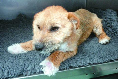 Rory has now made a full recovery and been rehomed