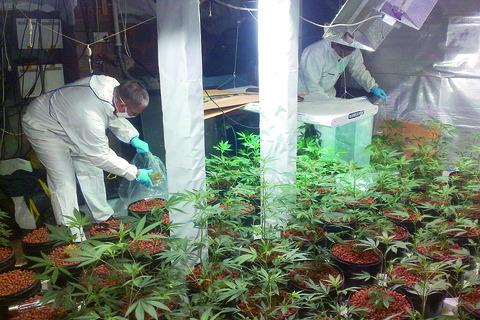 Police officers pictured shortly after finding the cannabis factory at the Burghill home of Glyn Hodges.