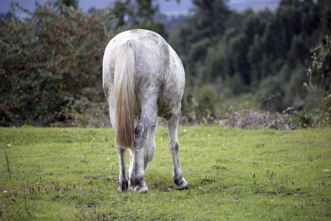 Take care when feeding horses on common land.