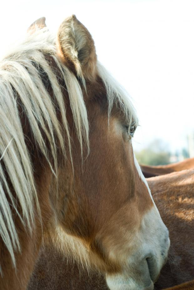 Hereford Times: The RSPCA is appealing for help in finding temporary homes for horses aff