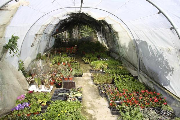 Hereford Times: An inquiry is to be held into a refusal to grant planning permission to erect polytunnels at a Kings Caple farm.