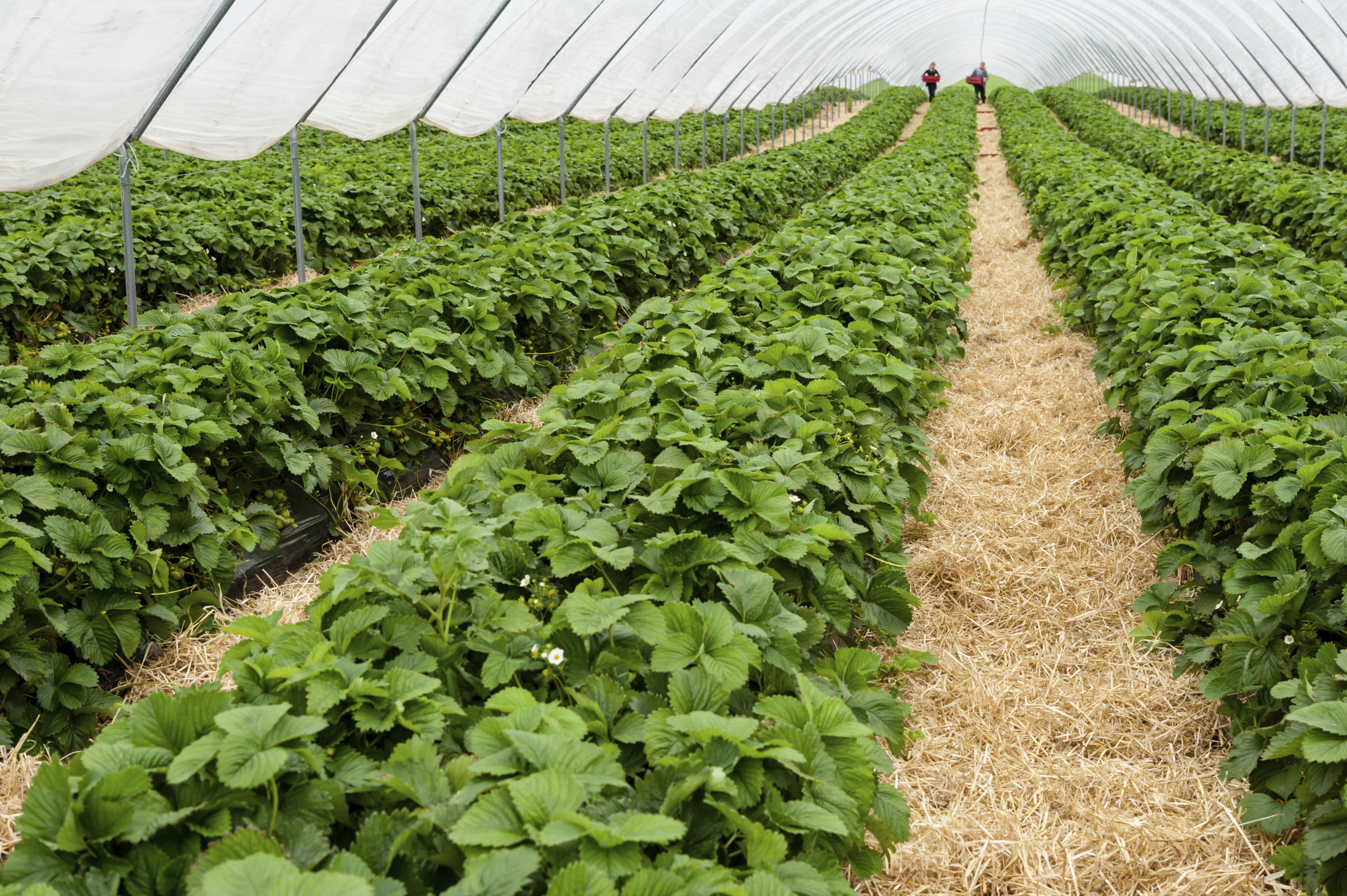 Farmer wins eight year fight for polytunnels
