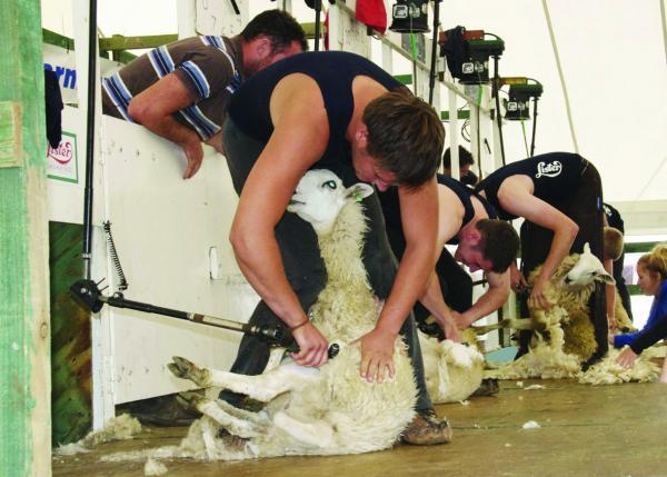 Top shearers will be lining up at the Kington Show.