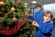 5114785401. 16/12/14.  Left to right - youngsters from Ledbury Primary School - Jack Zakotti aged 4, Mason Zakotti 7 and Ecaterina Constandis 4 with the Christmas tree donated to the school by Bridgend Fam in Much Cowarne. Picture by Nick Toogood. (147370