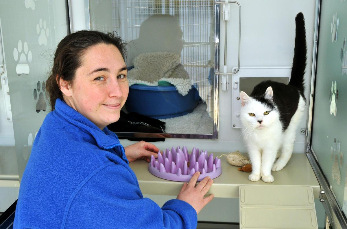 Cat rescue centres remind owners they are there to help