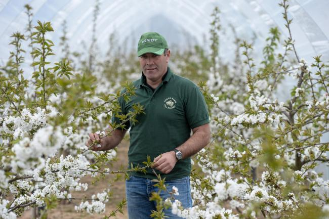 Pictured is Tim Gilbert with the blossoming cherry trees at Court Farm.