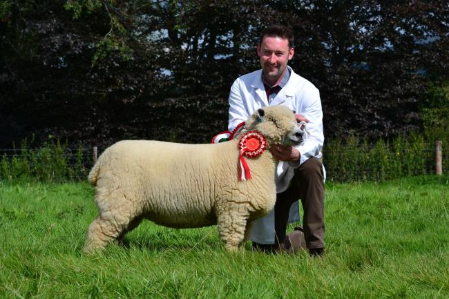 Shearling ewe from the Dolwen flock. New Breed Record price of 2700gns with Simon Donovan. Photo: P Gray