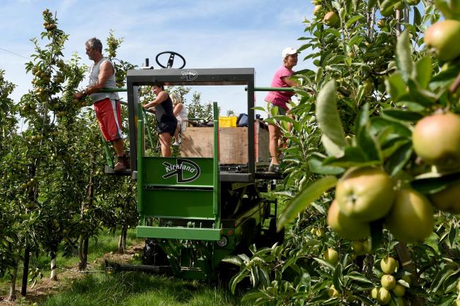 Could Herefordshire's orchards one day be a thing of the past?