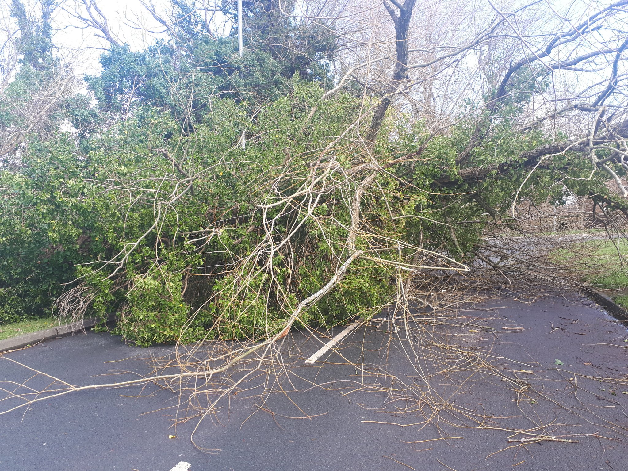 A tree blown down by the wind blocked Waterford Road in Hereford. Picture: Hereford police